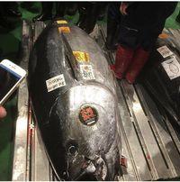 Pasar Toyosu Berhasil Lelang Ikan Bluefin Tuna Seharga Rp 43 Miliar!