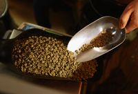 Apa Benar Kopi 'Decaf' Benar-benar Bebas Kafein?