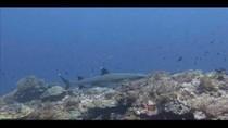 Membangunkan Hiu Tidur di Pulau Komodo