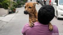 2 Warga Dompu NTB Mati Digigit Anjing, Pemda Nyatakan Status KLB