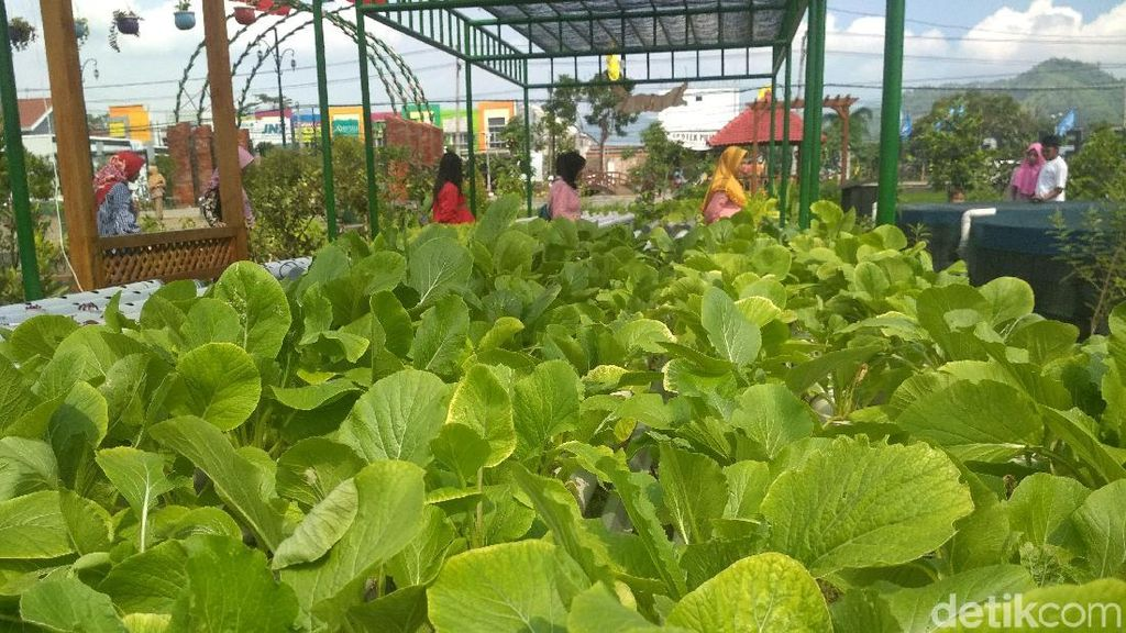 Foto: Agrowisata Kekinian dari Trenggalek