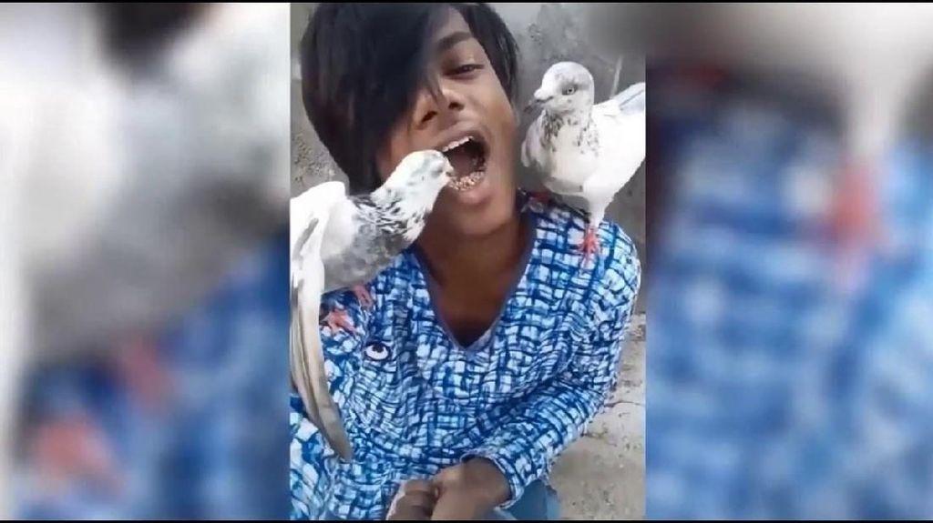 Seru! Pria Ini Beri Makan Burung Merpatinya Langsung Lewat Mulut