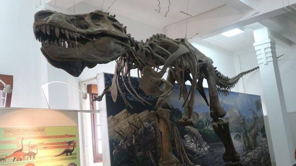 Ada Kerangka Tyrannosaurus Rex di Bandung!
