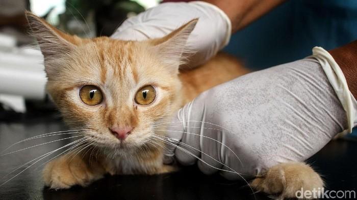 Sudin KPKP Jakarta Barat menggelar sosialisasi dan memberikan vaksin gratis bagi pemilik hewan peliharaan. Hal itu dilakukan untuk mencegah penyebaran rabies.