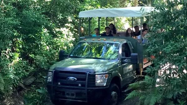 Traveler pun bisa naik mobil wisata untuk berkeliling (Kualoa Ranch)