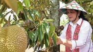 Jateng Surganya Durian Enak, Ganjar Pranowo dan Iriana Jokowi Sudah Membuktikan