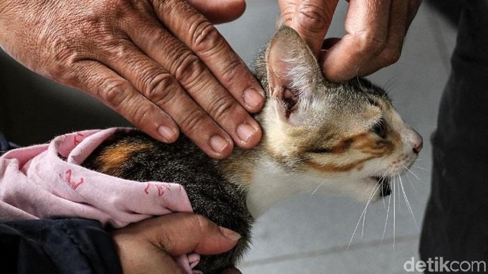 Vaksinasi penting bagi hewan peliharaan. (Foto ilustrasi: Rifkianto Nugroho)