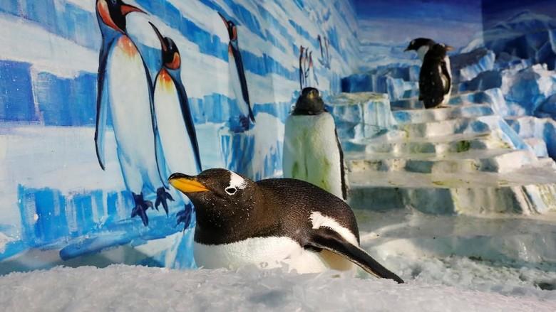 Aksi sekelompok penguin di Festival Es Harbin, China, menarik perhatian pengunjung. Seperti apa tingkah lucu nan menggemaskan para penguin itu?