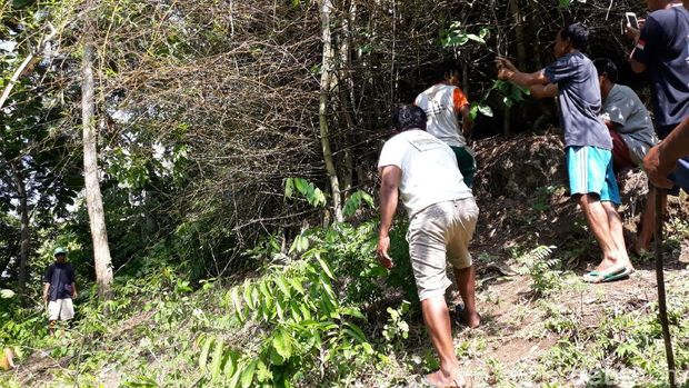 Ibu dan Anak Diserang Piton, Warga Gunungkidul Sweeping Sarang Ular