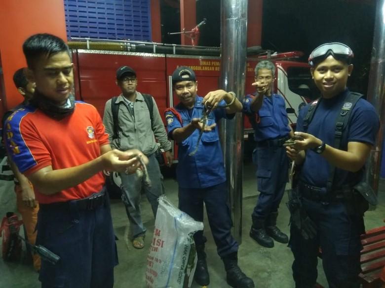Damkar Evakuasi 7 Ekor Sanca yang Bikin Kaget Warga Jagakarsa