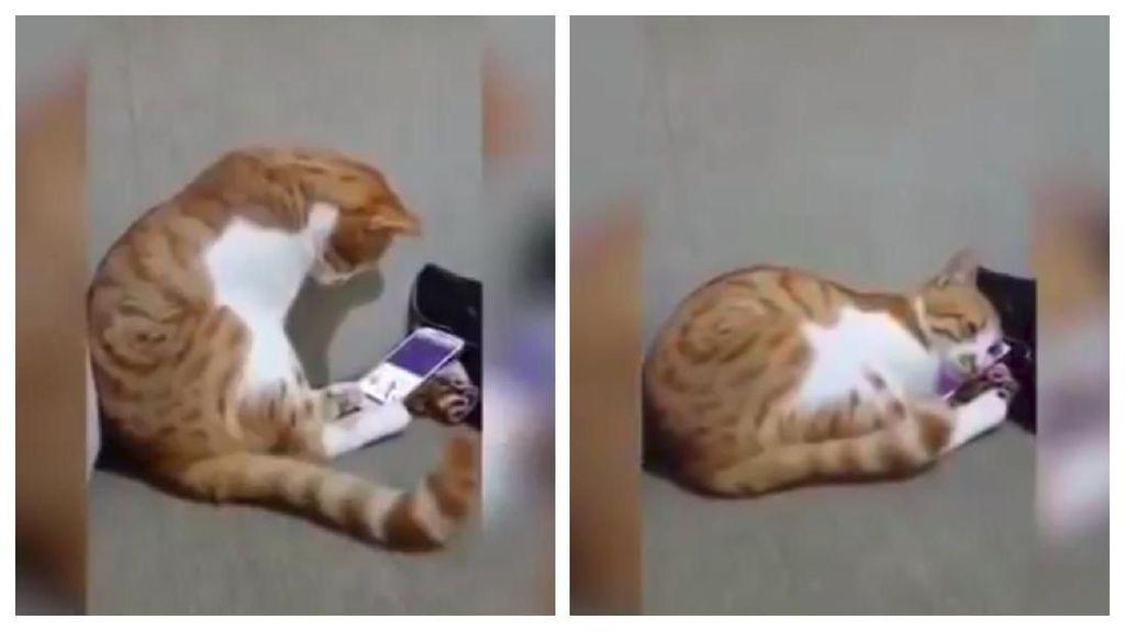 Bikin Mewek, Viral Video Kucing Lihat Video Temannya yang Sudah Tiada