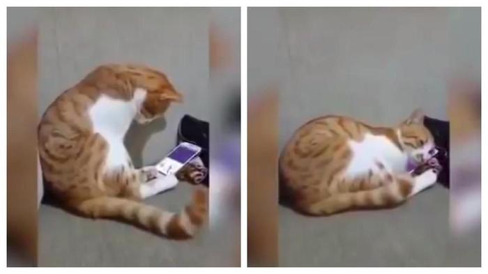 Video kucing yang viral karena mewek ditinggal pemiliknya. Foto: YouTube