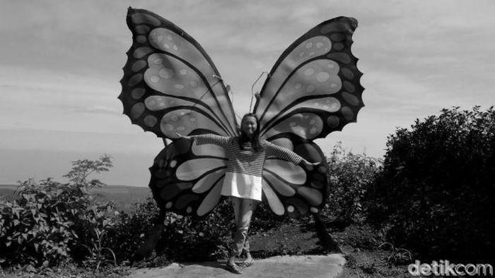 Harusnya kamu bisa melihat warna asli sayap kupu-kupu di gambar. (Foto: detikHealth)