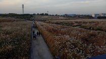 Siapa Sangka, Taman Cantik Ini Dulunya Gunung Sampah