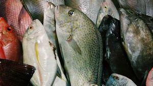Ikan Segar Lebih Awet Kalau Disimpan dengan Cara Ini