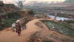 Di daerah dataran tinggi Madagaskar, para pria dewasa melakukan olahraga ekstrem gulat banteng untuk membuktikan kejantanannya dan memikat hati calon istri.