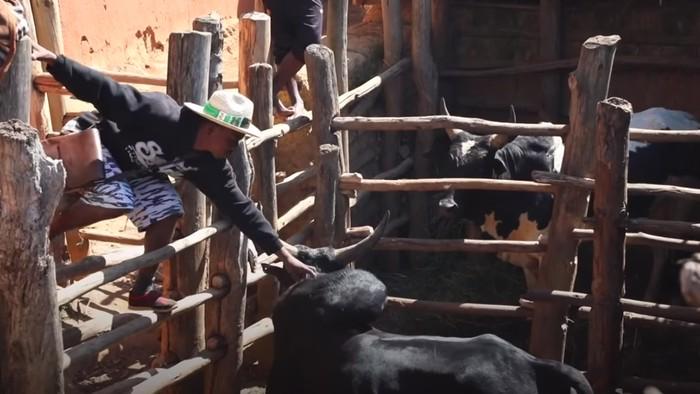 Hal ini dilakukan dengan menunjukkan keberanian mereka menghadapi banteng yang mengamuk di arena. (Foto: Youtube/BBC News)