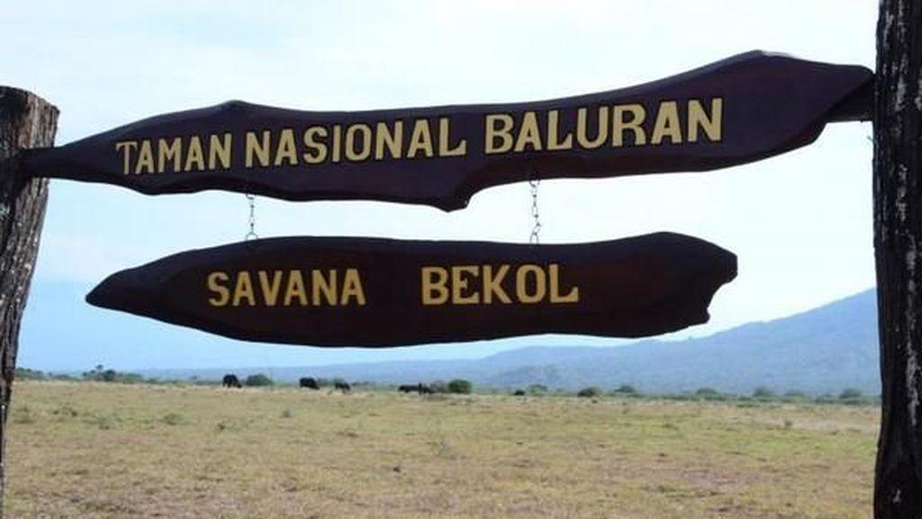 Harga Lengkap dari Fasilitas Taman Nasional Baluran