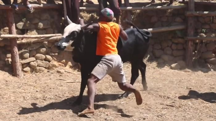 Gulat dinyatakan selesai bila banteng sudah menyerah kewalahan atau sang pegulat terluka. (Foto: Youtube/BBC News)