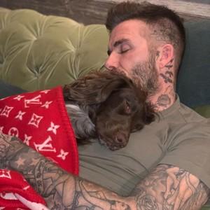 Mewah, Anjing David Beckham Tidur Pakai Selimut Louis Vuitton Rp 83 Juta