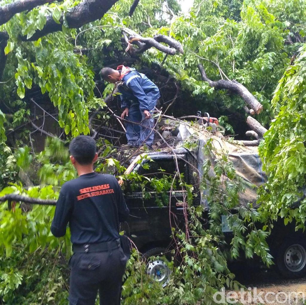 Pohon Tumbang Timpa Pikap di Ketabang Kali, Dua Orang Selamat