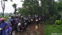 Pohon Tumbang di Jalur Pasuruan-Purwosari Sempat Lumpuhkan Lalin