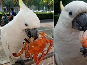 Gemas! Burung Kakatua Asal China Ini Doyan Banget Makan Seafood
