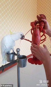 Gemas! Burung Beo Asal China Ini Doyan Banget Makan Seafood