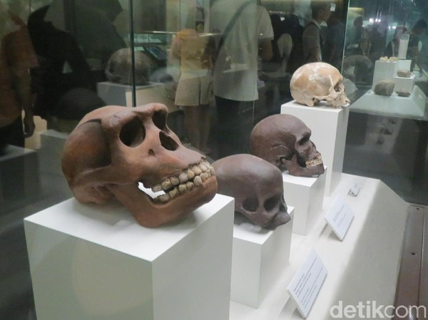 Museum ini punya banyak koleksi menarik. Ada replika tulang manusia purba dari berbagai tempat di Asia Tenggara (Fitraya/detikTravel)