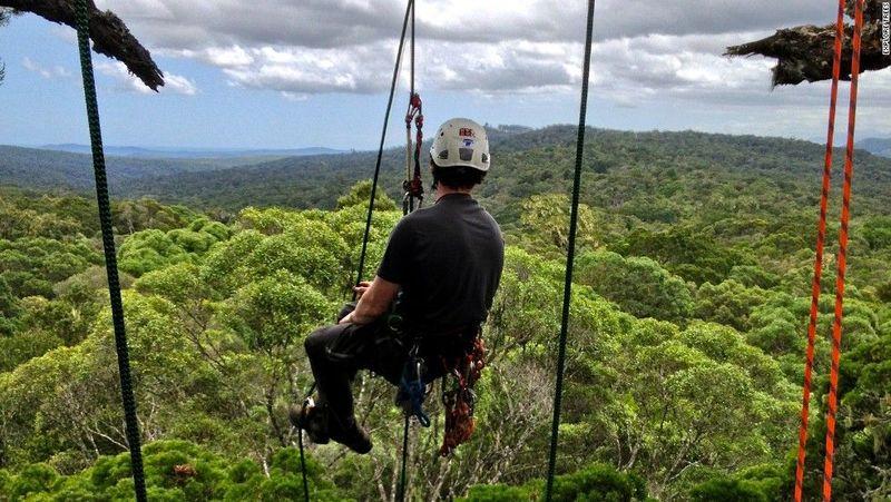 Pepohonan ini seperti rajanya pohon di hutan karena ketinggiannya. Puncak pepohonan yang rimbun itu ada di Afrika Selatan (CNN World +)