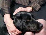 Kisah Anjing Terlatih Bantu Saksi Lewati Proses Sidang Penuh Tekanan