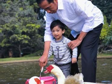 Saat akhir pekan, waktunya santai nih.Jokowi mengajak sang cucu main bareng angsa-angsa. Jan Ethes tetap sadar kamera ya. (Foto: Instagram @jokowi)