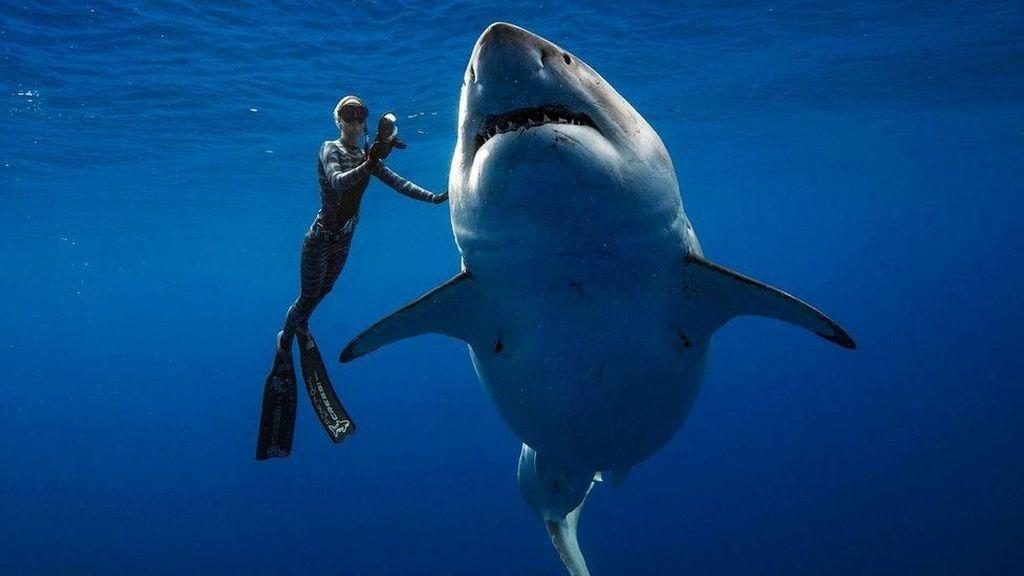 Mahasiswi Tewas Diserang 3 Hiu Saat Snorkeling di Bahama