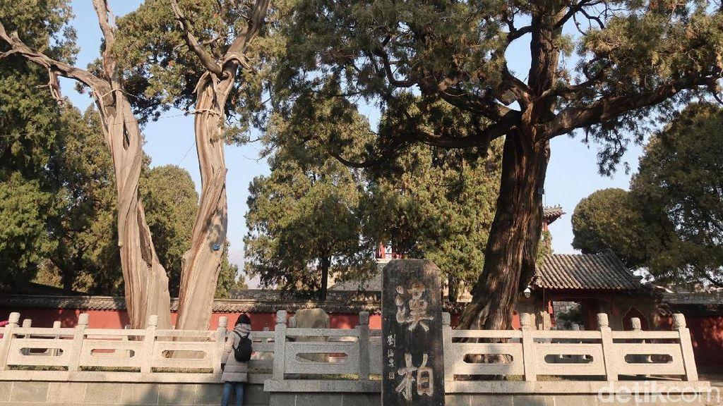 Foto: Pohon Berusia Ribuan Tahun & Batu Keberuntungan di China
