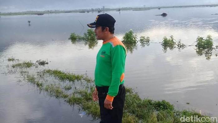 Sawah yang terendam banjir di Kecamatan Kalibening, Banjarnegara, Jumat (18/1/2019).