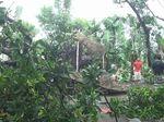 Video Puluhan Rumah di Probolinggo Diterjang Puting Beliung