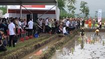 Ditemani Ridwan Kamil, Jokowi Blusukan ke Sawah di Garut