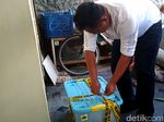 Buaya Muara-Ular Piton di Blitar Diamankan dari Diduga Pemakai Narkoba