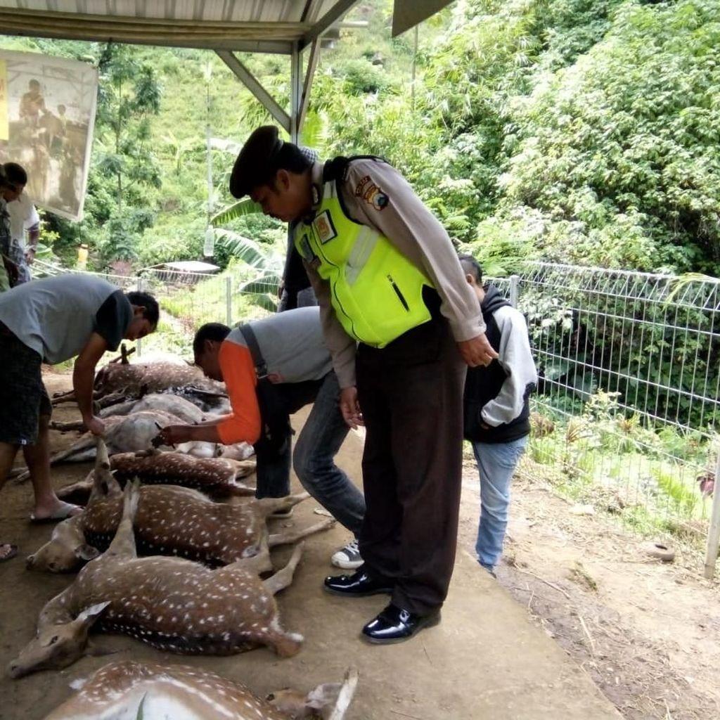 Belasan Rusa di Obyek Wisata Coban Jahe Malang Ditemukan Mati