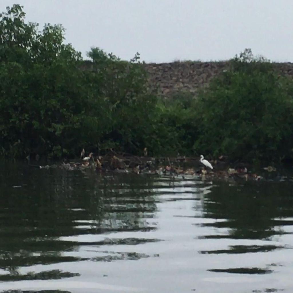 Duh! Sampah Masih Ancam Ekosistem Burung Air