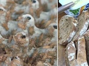 Enak dan Sehat, Toko Kue Ini Buat Roti Berbahan Tepung Jangkrik