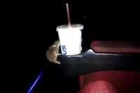 Hiii! Tikus Ini Berkeliaran Dalam Bioskop untuk Endus Makanan