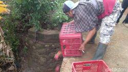 Harga Anjlok hingga Rp 1.500/Kg, Petani Buang Buah Naga ke Sungai