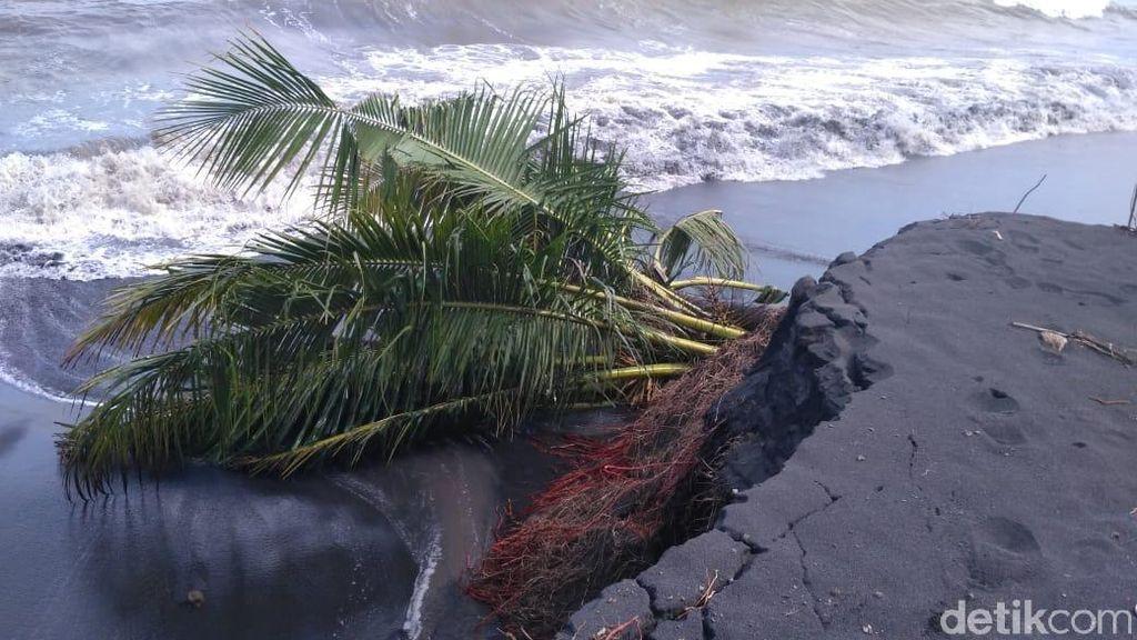 Pantai di Lumajang Abrasi Usai Diterjang Gelombang Tinggi