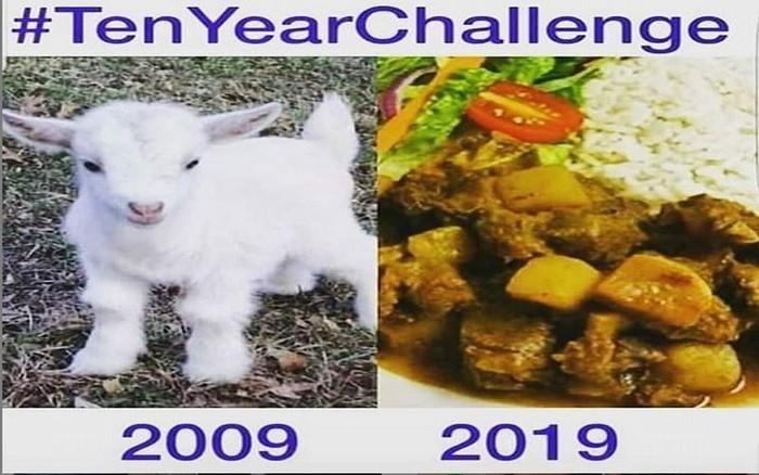 Seperti ini kira-kira gulai kambing yang kamu makan sekarang. Dahulu daging kambingnya masih berupa seekor anak kambing menggemaskan. Foto: Istimewa