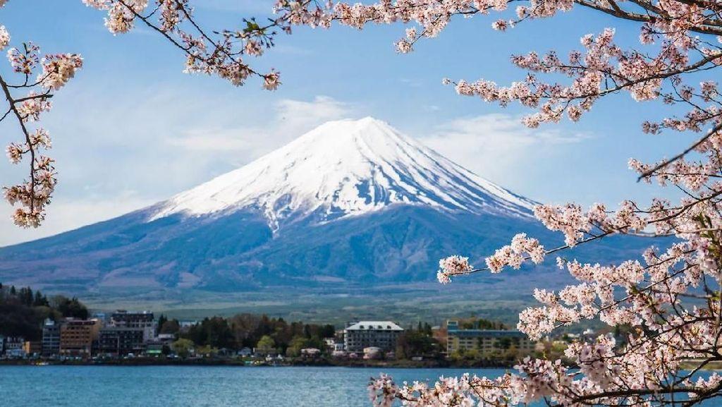 Ingin Menikmati Indahnya Bunga Sakura dengan Biaya Murah?