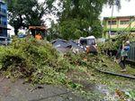 Pohon Tumbang Timpa 2 Mobil dan 1 Rumah Warga di Makassar