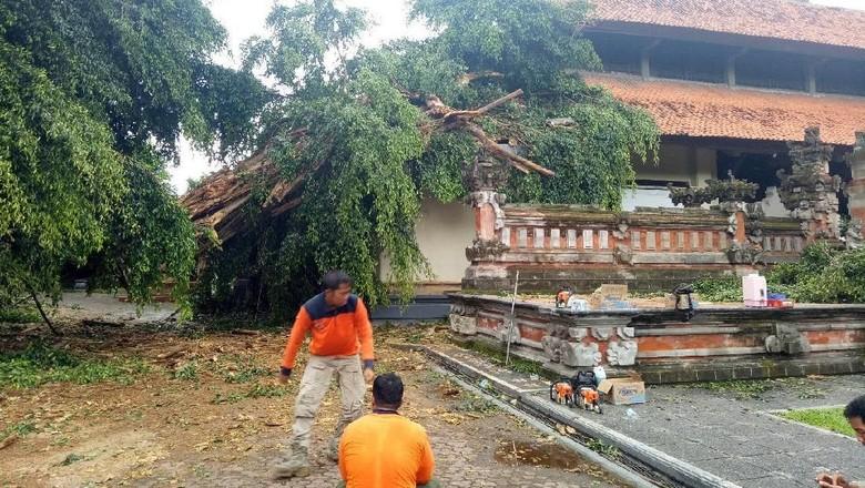 Beringin di Rumah Dinas Gubernur Bali Tumbang