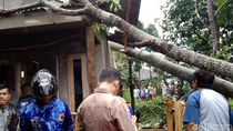 Pohon Tumbang Timpa Rumah di Sukabumi, Penghuni Luka Ringan