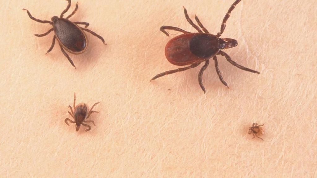 3 Fakta Tick-Borne, Virus yang Mewabah di China di Masa Pandemi Corona